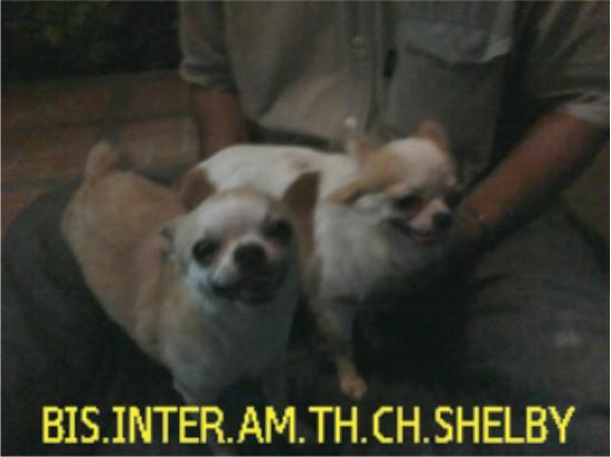 รับจับสุนัขผสมพันธุ์ รบกวน ( รบกวนโทรนัดล่วงหน้านะครับ ) ครั้งละ600บ.