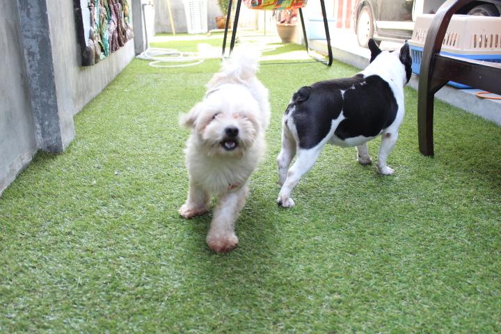 รับฝากสุนัข ทั้งไปกลับและค้างคืน รายวันหรือรายเดือน(ราคาเหมา) By TommyFamily