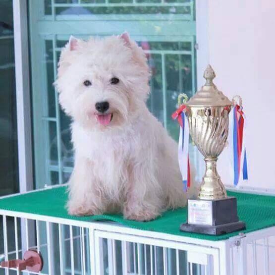 ลูกเวสตี้ พร้อมย้ายบ้าน พ่อเป็นแชมป์ไทยแลนด์  ,Westies