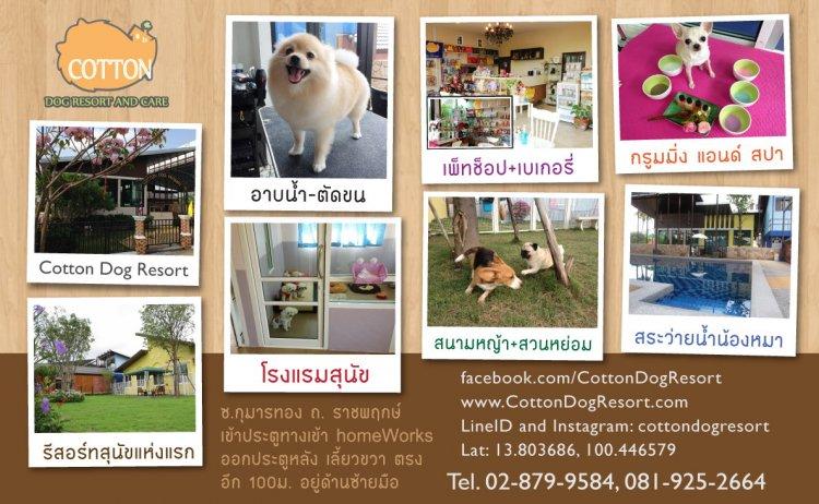 Cotton Dog Resort and Care โรงแรมสุนัขห้องพักสุนัขสุดหรู
