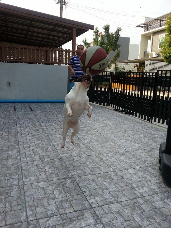 อาบน้ำ ตัดขน สุนัข น้องหมา&น้องแมว บริการฝากเลี้ยง ไม่ขังกรง พร้อมบริการรับส่ง