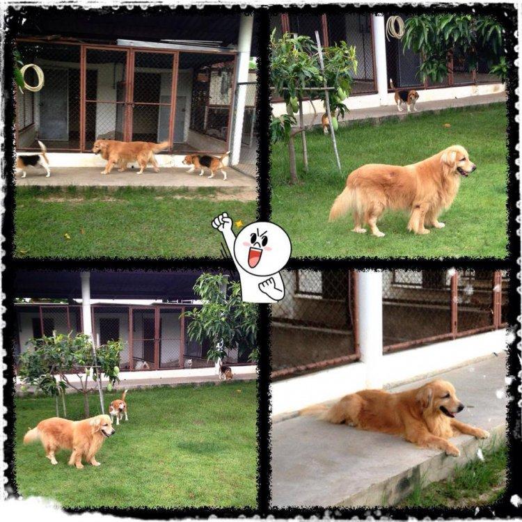 โรงแรมสุนัขและแมว ต.บางพระ อ.ศรีราชา จ.ชลบุรี