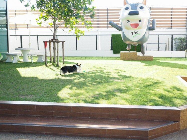 สถานที่ที่น้องหมาของคุณ จะสามารถมีอิสระและมีความสุขไปพร้อมๆ กับคุณพ่อคุณแม่