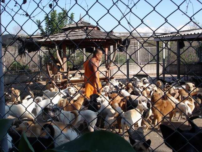 วัดเวฬุวนาราม ลำปาง ตามกำลังศรัทธา และทางวัดมีภาระช่วยเหลือสุนัขจรจัด 700 ชีวิต