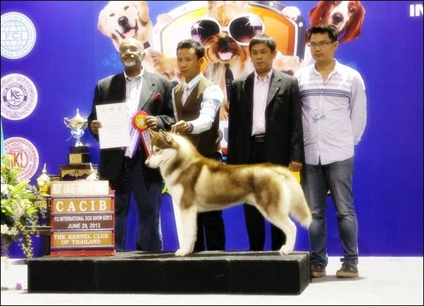 ขายลูกไซบีเรียนฮัสกี้ลูกไทยแชมป์