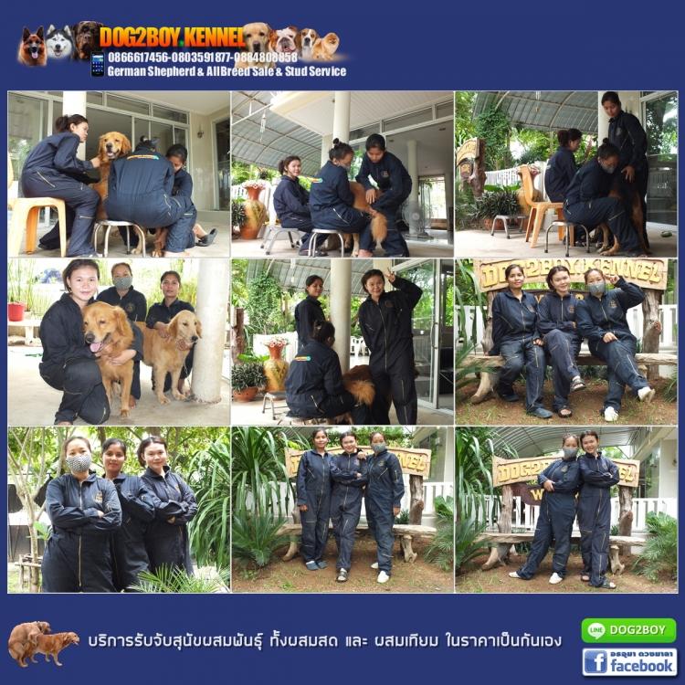 !!!!!AAA-มีลูกสุนัขไซบีเรียนฮัสกี้ ( วูลลี่โค๊ด )จำหน่ายบางโอกาส และรับผสมพันธุ์-AAA!!!!!