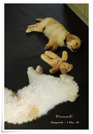 ขายแผ่นยางกันลื่น ผ้ายางปูกันลื่น แก้ปัญหาพื้นลื่น สำหรับสุนัขได้ดี