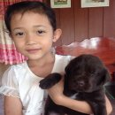 P&P Labrador Petburi เปิดจองลูกสุนัขสีช็อค เพศผู้ 5 ตัว พ่อพันธุ์ TH.CH.MONARCH  โทร.086 1737127