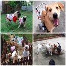 Clicker Dog รับฝากสุนัข เขตทวีวัฒนา (รับจำนวนจำกัดเพื่อการดูแลที่ทั่วถึง)