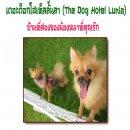 โรงแรมอันแสนสุขของน้องหมาที่คุณรักทั้งขนาดกลาง และขนาดเล็ก ย่านบางบัวทอง