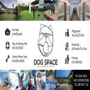 Dog Space สระว่ายน้ำ ฝากเลี้ยงสุนัข