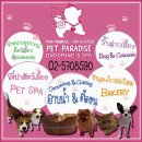 Pet Paradise Spa บริการ รับฝากสุนัขและแมว ในราคาไม่แพง มีคนดูแล 24 ชม. สถานที่ปลอดภัย