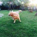 B.B. Grooming รับฝากเลี้ยงสุนัข บริการรับ-ส่งถึงบ้าน