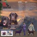 PS Labrador เปิดรับจอง ลูกสุนัขลาบราดอร์สีช็อคฯเกรดคุณภาพสูง (Show Quality) คลอด 24 ก.พ. 2560