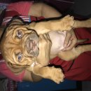ขายลูกสุนัขพิทบลูเรดโน๊ต พร้อมใบเพ็ดค่ะ.15000 ผู้1 เมีย2 สนใจติดต่อ0866669465