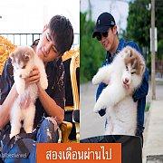 ฟาร์มไซบีเรียนที่ดีและใหญ่ที่สุดในไทยALL BEST KENNEL ไซบีเรียนเกรด Hi-end