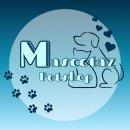 Westie Terrier(เวสตี้) อายุ3เดือน เพศชาย วัคซีน3พร้อมสมุด ใบเพ็ดดีกรีจากสมาคม
