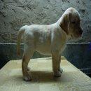 ลูกสุนัขลาบราดอร์ เพศผู้ อายุ57วัน พ่อเป็นไทยแชมป์ ใบเพ็ดดีกรีเต็มใบ ทำวัคซีนรวม5โรคแล้ว1เข็ม