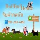 Bullbullhouse บริการรับฝากสุนัขขนาดเล็ก-ขนาดกลาง ย่านรามอินทรา