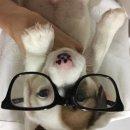 ลูกสุนัขแจ็ครัซเซล ขนหัก,ขนสั้น เกิดวันวาเลนไทน์ / Jack russell puppy