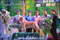 พ่อพันธุ์ Golden Rertiever Thailand Champion รับผสม