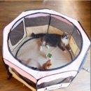 กรงแมว ที่นอนแมว ที่นอนสุนัข ติดมุ้งพับเก็บได้ รุ่นพิเศษ ทำความสะอาดง่าย(รุ่นหนาพิเศษ ทนแรงได้ดีกว่า