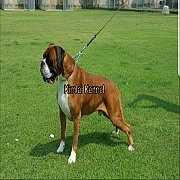 for sale  Boxer Quality show